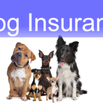 Five Things To Know About Dog Insurance