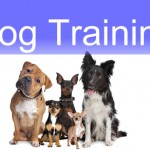 Dog Training Classes For Teddy