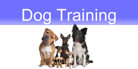 Dog Training Classes - Teddy's Experience
